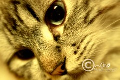_MG_7665[1]2333 (Nora Talib) Tags: cats cute love cat nice eyes you sweet u sweetheart lovely جميل وحيد قط قطو هّر جميب