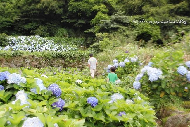 20110612_YangMingMtFlowe_0204 f