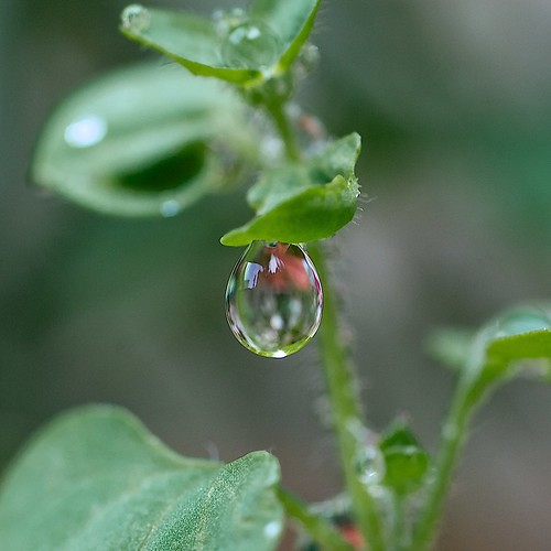 Drop after rain by alopez2006