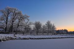 Snow - Haaksbergen 2 (srirang1) Tags: winter snow sunrise sneeuw twente haaksbergen zonsopkomst buurserbeek