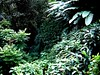 Puerto Rico Rainforest - Edited