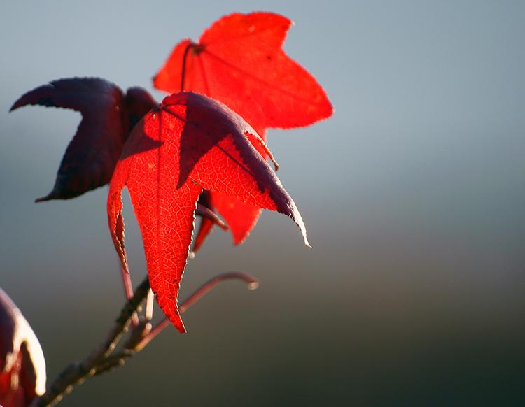 Rojo en Fauna y flora3195185548_833cf4e6d5_o.jpg