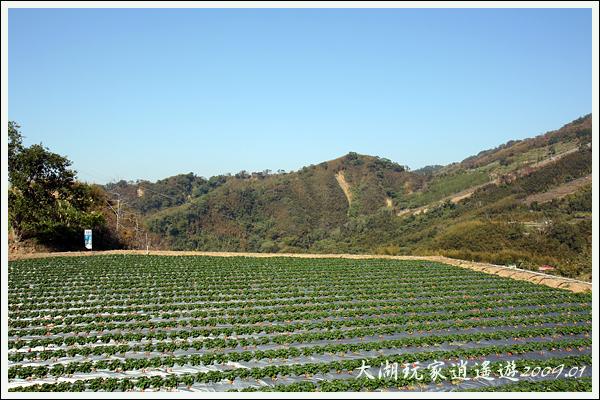 090117_02_採草莓