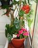 """Mini área de serviço (Santinha - Casas Possíveis) Tags: plantas jardim quintal reciclagem vasos margaridas temperos paisagismo cipó varandas cestos reutilização bacia dicas cachepôs truques """"minijardim"""" """"casaspossíveis"""" """"pequenosarranjos"""" """"floresnobalde"""" """"floresnachaleira"""" """"pequenosespaços"""" """"pequenasvarandas"""" """"cantinhoverde"""" """"cantinhoflorido"""" """"vasosparaamesa"""" """"blogcasaspossíveis"""" """"vasinhosnaáreadeserviço"""""""