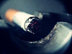 cancer (aN ACciDenT) Tags: macro fuego placer cenicero calor vicio cigarrillo enfermedad
