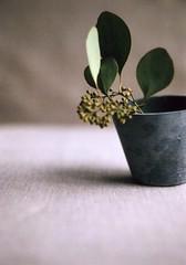 relish the calm moment (*shinobu) Tags: fuji sunday olympus eucalyptus f18 expired zuiko borrowedcamera penft 38mm takatsuki ilovegreen halfframecamera sp100
