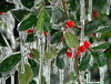 Iced Holly Berries (angie.doyle) Tags: icestormdarbycreek ourkentucky