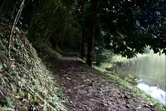 Camino en La Laguna del Tabacal (Aztlek) Tags: travel water ilovenature nikon colombia lagoon laguna lavega sudamerica d60 cundinamarca ufraw wildlifephotography nikond60 natureisart lifetravel zoomnikkor18200mmf3556gifed lagunadeltabacal tabacallagoon