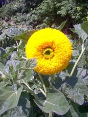 Aufgenommen im Botanischen Garten von Palermo