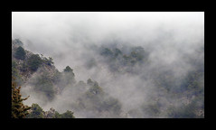 Misty Mountain (Ipso) Tags: mist mountain forest sierra bosque granada montaña niebla huétor the4elements