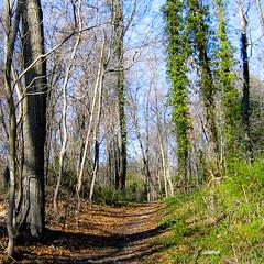 2 Years on Flickr. (WildernessMed87) Tags: trees newyork leaves spring path stonybrook longisland flickrversary a80 stonybrookuniversity