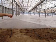 Invernadero cubierto con plastico 2 (Juanpi1) Tags: almería agricultura invernadero soloraf