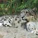 Woodland Park Zoo Seattle 048