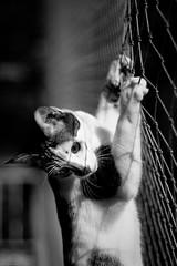 A Fuga II (André Corrêa) Tags: bw cats white black branco cat chat gatos pb preto gato felinos felino felidae andrécorrêa