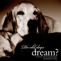Do-Old-Dogs-Dream