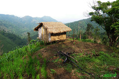 thlam/Jhum hut (azara ralte) Tags: india lo hut agriculture cultivation mizoram shiftingcultivation jhum thlam northheastindia jhumming zomia swiddening