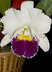 1281ed (glass eye2007) Tags: orchids showwinners
