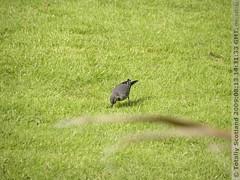 Birds on Ballachulish golf course