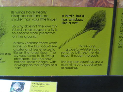 NZ Kiwi Info (no, it's a bird not just a fruit!)