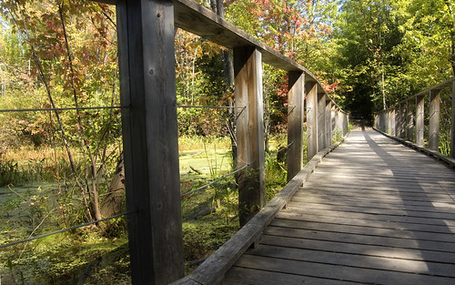 230b:365 Bridge