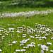 DSC_0006-01 - my garden summer