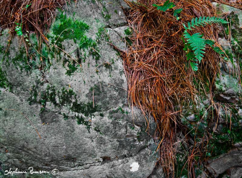 Through the rocks 6