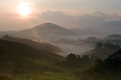 Another day, another sunrise (QooL / بنت شمس الدين) Tags: travel sun mist nature sunrise landscape dawn tea hill highland valley malaysia plantation layers rays cameronhighlands ridges qool sgpalas qoolens