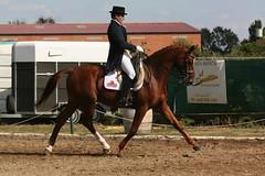 327_2713 (JUANLUBIS) Tags: horses horse sport canon caballo cheval caballos competition cavallo cavalo equestrian equine equus chevaux dressage equitation horserider galope domaclsica dressur equineart domaclasica horsesanddreams