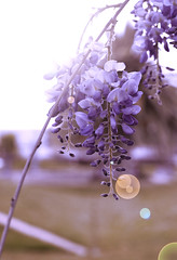 Just a glance of wonderful bright purple (Qiao.Wei) Tags: blackandwhite plant flower 20d wall trolley  carpark canoneos