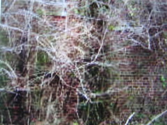Do You See Him? (1Jimbo1) Tags: abandoned buildings hospital eerie haunted creepy spirits haunting ghosts paranormal deserted apparitions glenndale glenndalehospital 1jimbo1