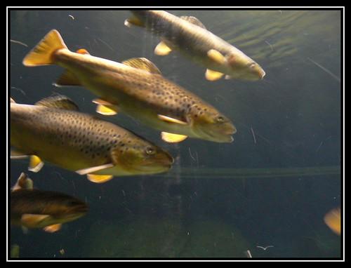 Viele Fische