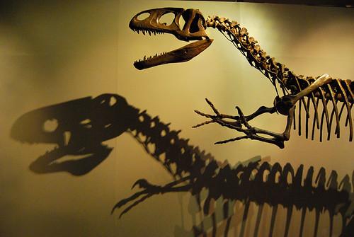 Dinosaur Skeleton - Dublin, Ireland by rigilbert
