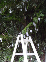 YOKO ONO WISH TREE ASUNCION (PARAGUAY) FOR LGBT HUMAN RIGHTS (Jorge Artajo Muruzabal) Tags: paraguay yokoono asuncin wishtree jorgeartajo colecinvisible