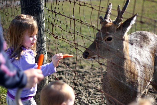 emma feeding deer