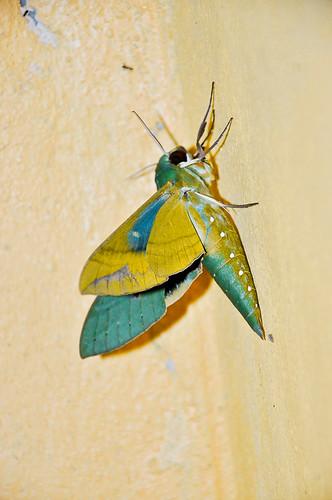 Mariposa verde (07)