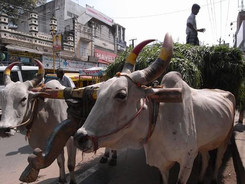 街角の牛/Madurai