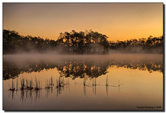 Early Morning Mist (Fraggle Red) Tags: orange mist lake yellow fog dawn nationalpark florida evergladesnationalpark campground jpeg pinetrees hdr blueribbonwinner vob enp canonefs1785mmf456isusm 3exp longpinekey abigfave impressedbeauty theunforgettablepictures miamidadeco dphdr thegreatshooter artofimages gpsetest