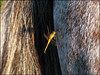 Sorte (ccarriconde) Tags: horse brasil dragonfly ccarriconde cristinacarriconde libelula campo rs cavalo libélula riograndedosul copyright©cristinacarricondeallrightsreserved ©cristinacarriconde capãoseco lilidragonfly