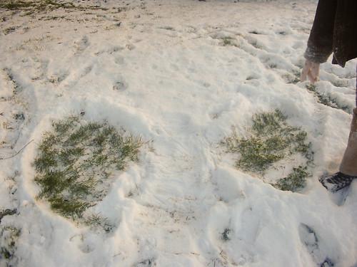 Il a neigé sur Tours 4