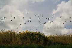 .. (ДĿΚußαisї) Tags: sky grass canon pigeons birdies doha qatar قرد قطر بحر 24105mm طيور غيم الشمال northqatar alkubaisi قرم حريش لووه خصيفي