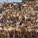 Livestock market, Babile