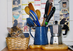 When it was young (landerjack) Tags: kitchen kitten basket cucina caffettiera gattino cesta coffepot catnipaddicts