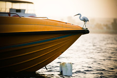 Heron (WomEOS) Tags: holiday beach heron boats redsea egypt sharmelsheikh 2009 naamabay