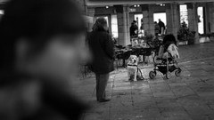 Quattro cani per strada. Il terzo... (pierofix) Tags: city light bw dog white black cane canon square eos 50mm soft labrador dof bokeh f14 14 centro center bn piazza 169 bianco nero irma luce passeggino citt udine sangiacomo morbido sfuocatura 400d pettorina
