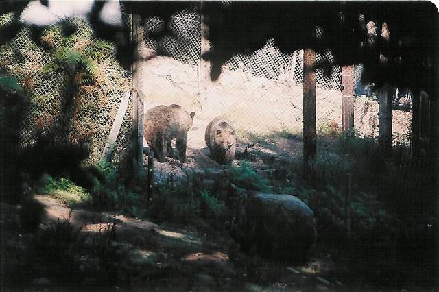 Δυτική Μακεδονία - Φλώρινα - Κοινότητα Νυμφαίου Αρκούδες στο Πάρκο του Αρκτούρου στο Νυμφαίο