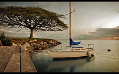 Tranquillity by the Tree (JN) Tags: ocean sunset sea tree beach bronze point hawaii golden harbor boat still dock peace sundown oahu dusk calm foster sail rest safe 1735mmf28d tranquil hickam d700 nikon1735mm nikond700 nikon1735mmf28