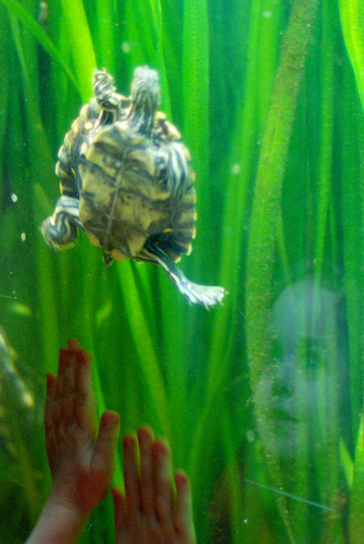 r TN Aquarium 278
