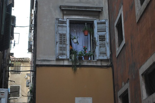 Window in Split