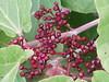 Cherry (Jayaprasad Murthy) Tags: trekking betta nearbangalore maakali