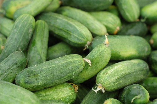 Pickling cukes